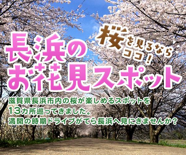 長浜のお花見スポット!ドライブがてら桜を見るならココがおすすめ!