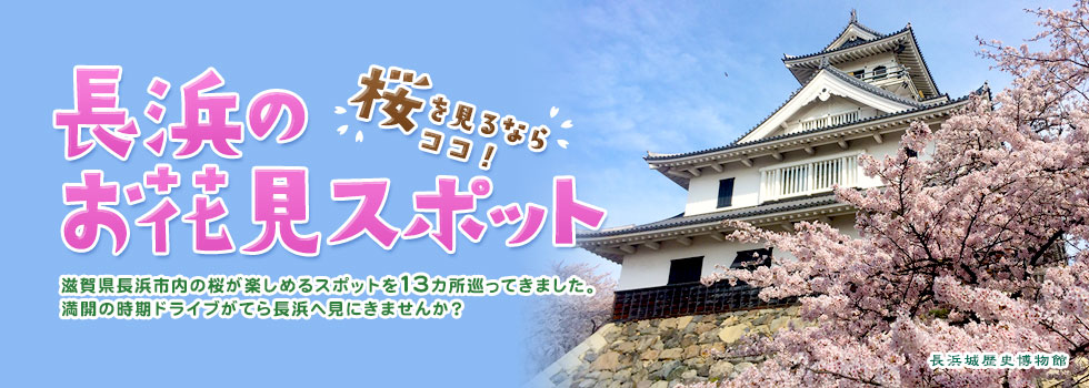 滋賀県で桜を見るならココ!長浜のお花見スポットを巡ってきた