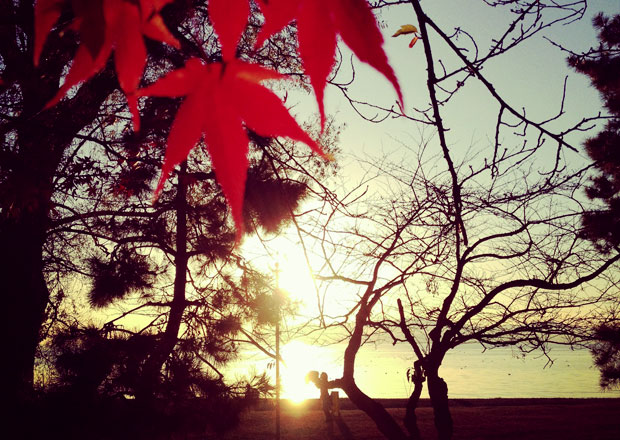 長浜駅からたった5分!びわ湖で見る絶景夕日スポット