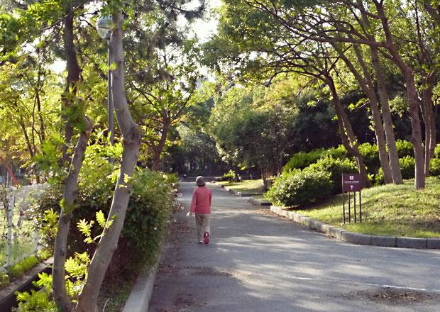 豊公園の中の道を進む