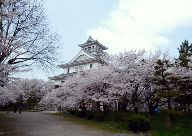 桜と長浜城