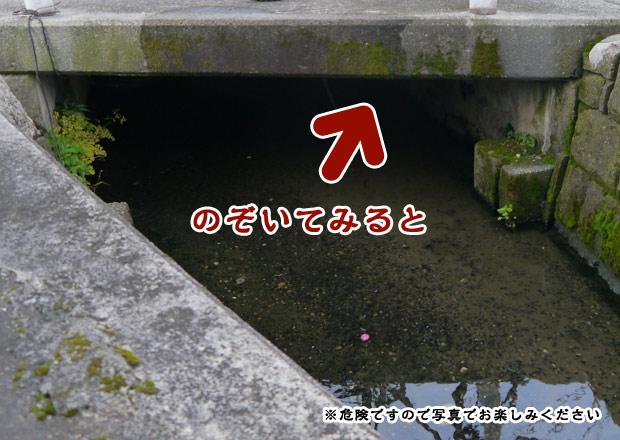 橋の下に長浜領の石柱