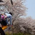 桜並木を走る「あふみ舎宇留野くん」