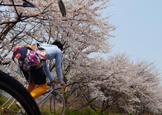 びわ湖沿い(長浜駅〜木之本間)をサイクリングで楽しんでみよう!