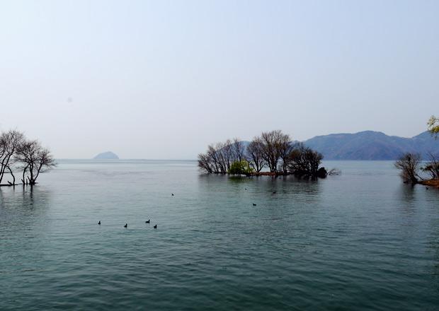 西野水道からの琵琶湖