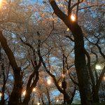 桜の木の下で花見