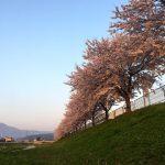 伊吹山と桜並木