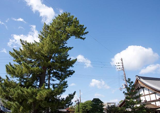 大通寺にあるゴジラ風の木