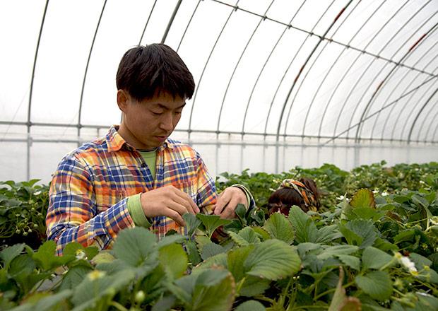 純野菜王国のイチゴ農園