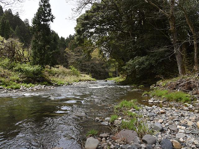 穏やかな杉野川