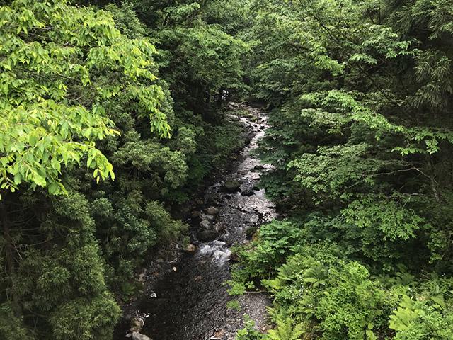 長浜市木之本の杉野川で渓流釣りにきた