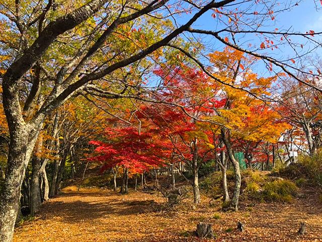 桜馬場の紅葉がとても綺麗
