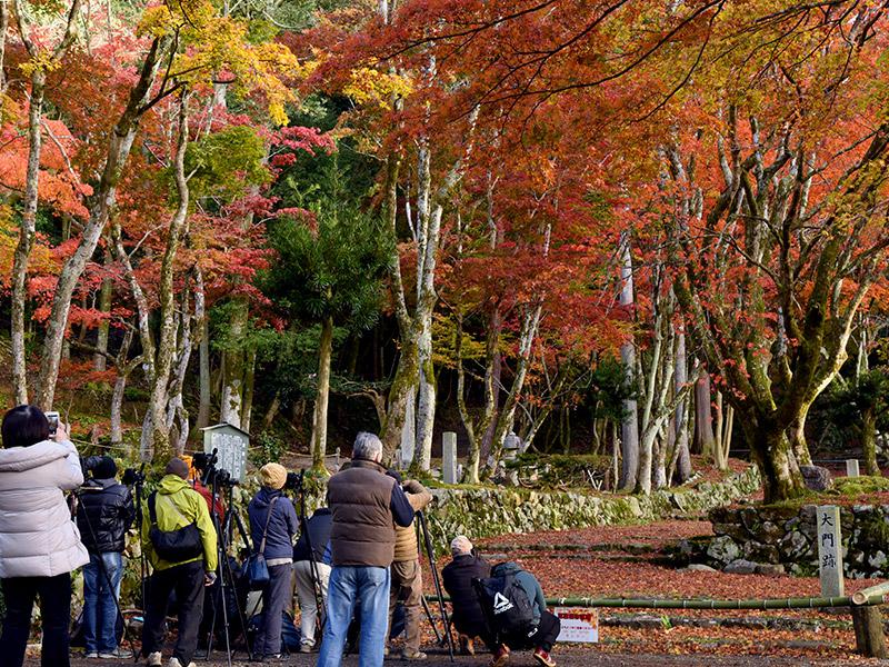 秋の鶏足寺へ紅葉を見に行こうよ!
