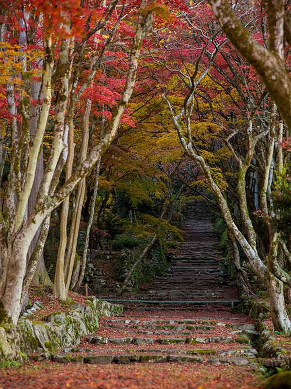 鶏足寺の紅葉を撮影してきました。