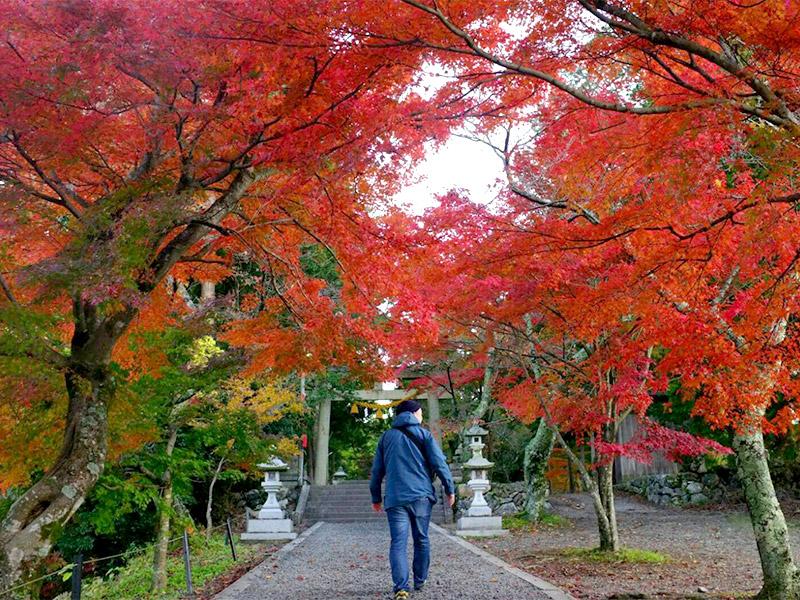 與志漏(よしろ)神社の参道の紅葉も好き