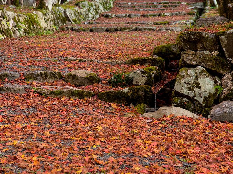 鶏足寺の紅葉の絨毯