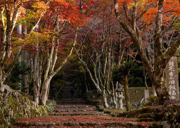 【滋賀・長浜で紅葉狩り】秋の鶏足寺へ紅葉を見に行こうよ!
