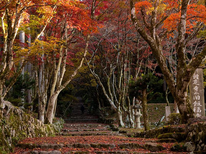 滋賀・長浜で紅葉狩り!秋の鶏足寺へ紅葉を見に行こうよ